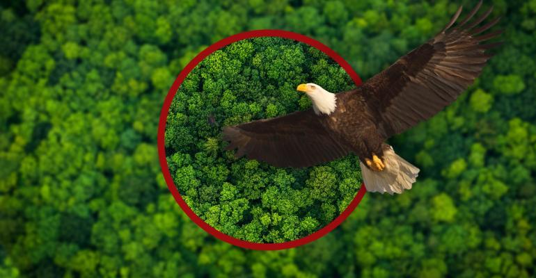 Natural Astaxanthin for Eagle Vision Algatech.jpg