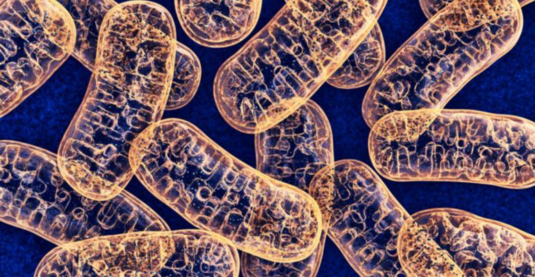 mitochondria .png