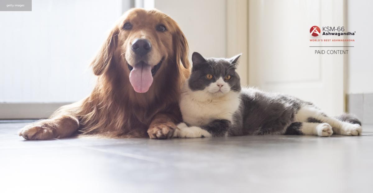 Ashwagandha for pet health – infographic