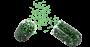 gelule-verte-3D-1-e1480440206544.png