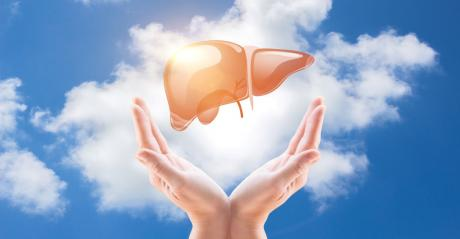 Support for a healthy liver