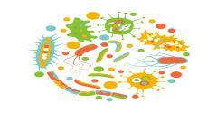 gut microbes design